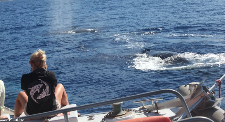 whales near boat