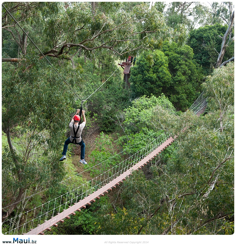 best maui zipline tours