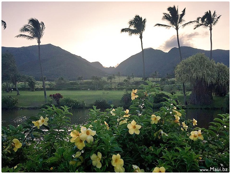 august 2015 maui events