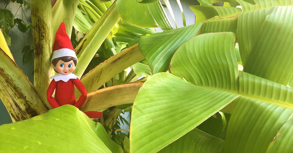 Elf on a Shelf – Hawaii Style