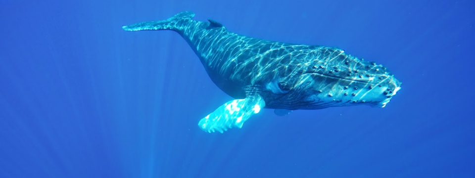 Close Encounters of the Whale Kind