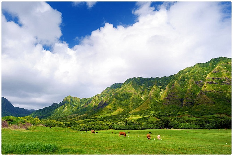 top rated activities oahu