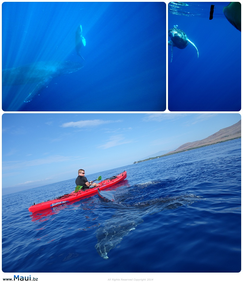 whale watching kayak tours
