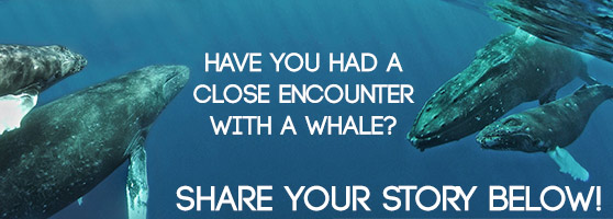 have you had a close encounter with a whale? comment below