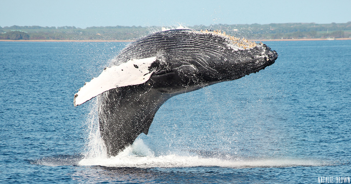 Our Whales Are BACK!