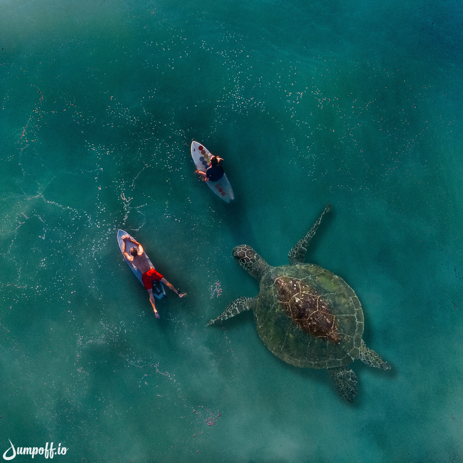Giant Honu with surfers