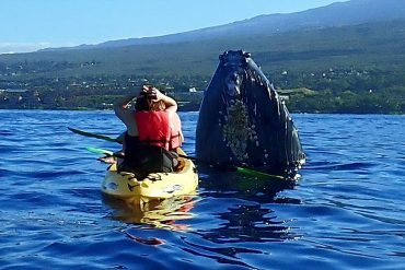 Maui kayak whale encounter