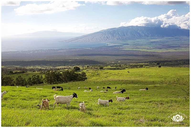 things to do in maui 2018