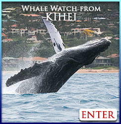 Kihei whale watch