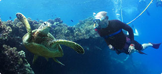 Maui snuba diving tours