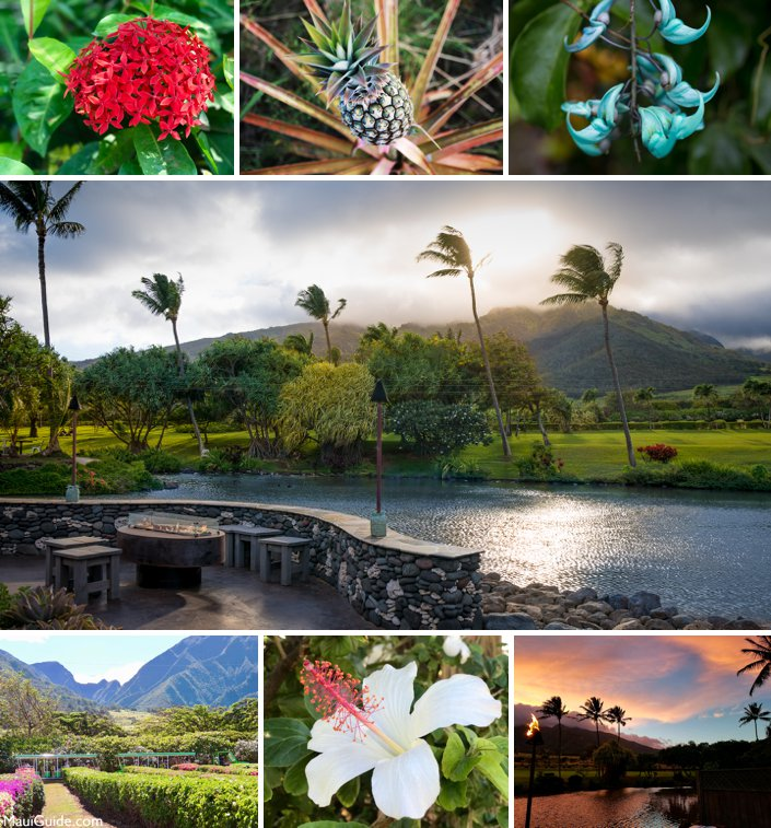 Maui Tropcial Plantation Weddings